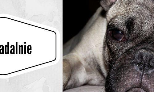 psie-jadalnie